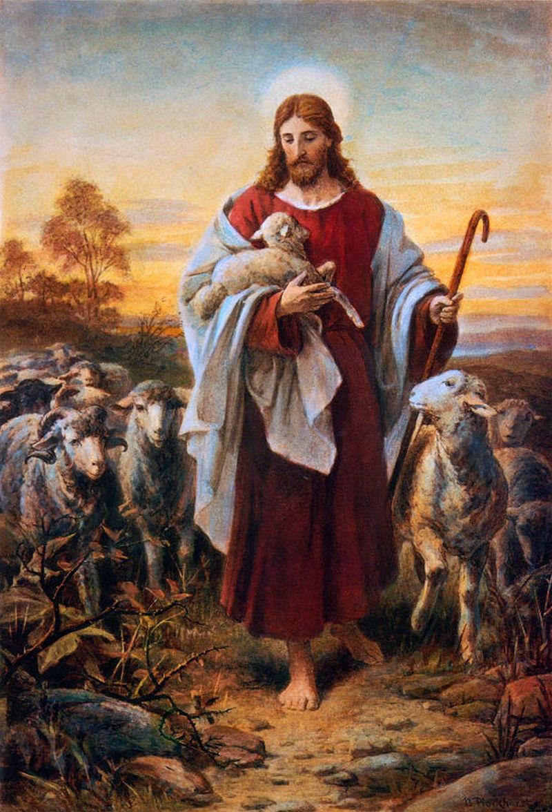 ویکی گوسفند