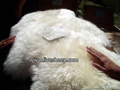 انواع پشم گوسفند و استفاده آن