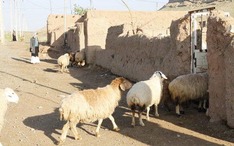 تجهیزات لازم در آغل گوسفندان