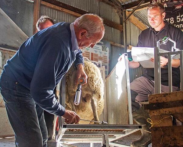 آموزش تلقیح مصنوعی گوسفندان
