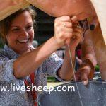 مراحل شیردهی گاو