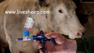 انواع واکسن و برنامه واکسیناسیون دام