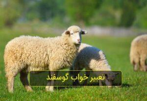 تعبیر خواب گوسفند زنده